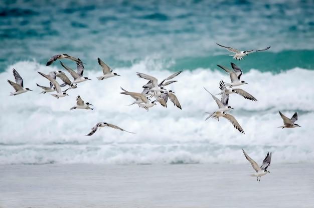 エメラルド色の水と白い泡のあるインド洋のカモメの群れ。ディアニビーチ。モンバサ。ケニア