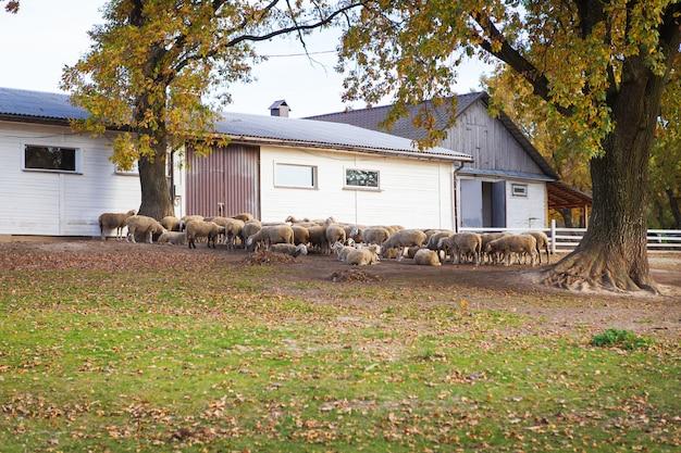 Стадо овец на зеленом лугу стоит возле своего стада.