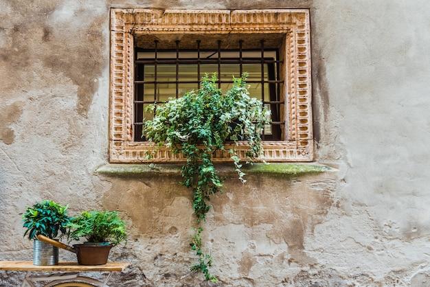 Цветок украшает решетчатое окно на старой стене красивого европейского города.