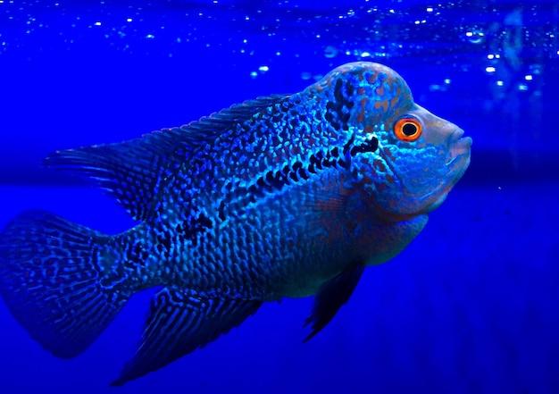 동물원의 수조에 있는 꽃뿔 물고기