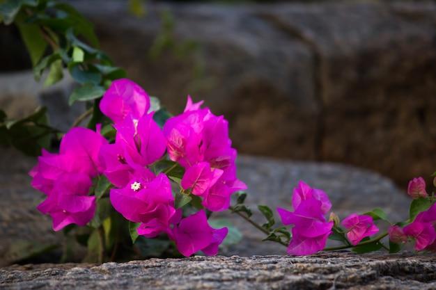 자연광을 반사하여 피는 자연 배경의 꽃