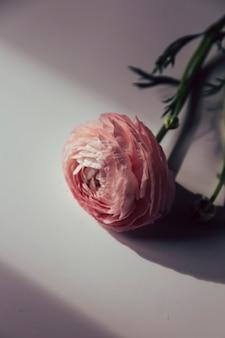 太陽の下で花