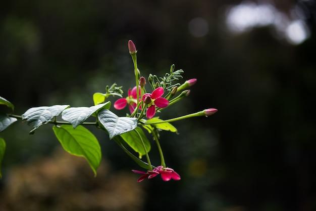 ブルームまたはブロッサムとしても知られる花は、開花に見られる生殖構造です。