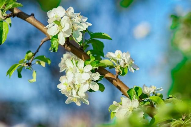 공원에서 자연에 꽃 지점