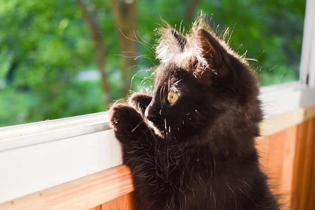 По подоконнику на балконе гуляет пушистый черный котенок. котенок выходит из открытого окна.