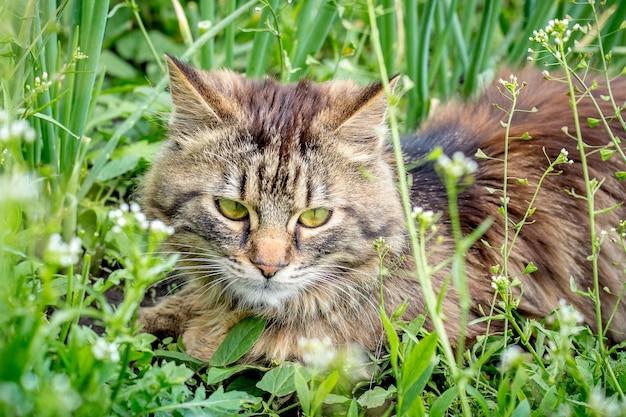 ふわふわの猫が暑い夏の日に密な緑の草の中に横たわっています