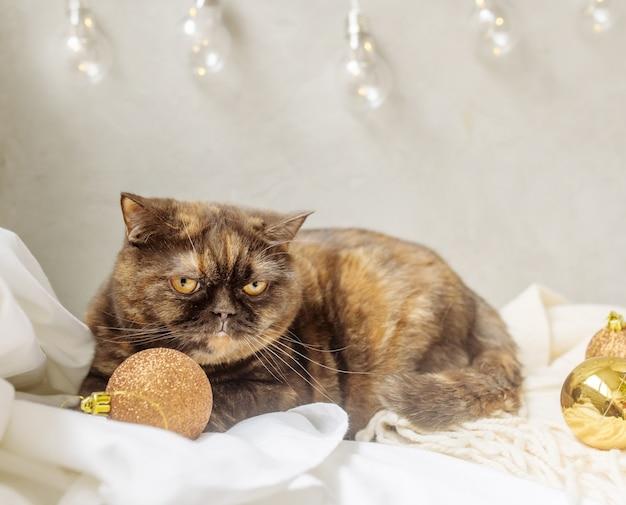 Пушистый домашний породистый кот лежит на кровати среди новогодних шаров и гирлянд.