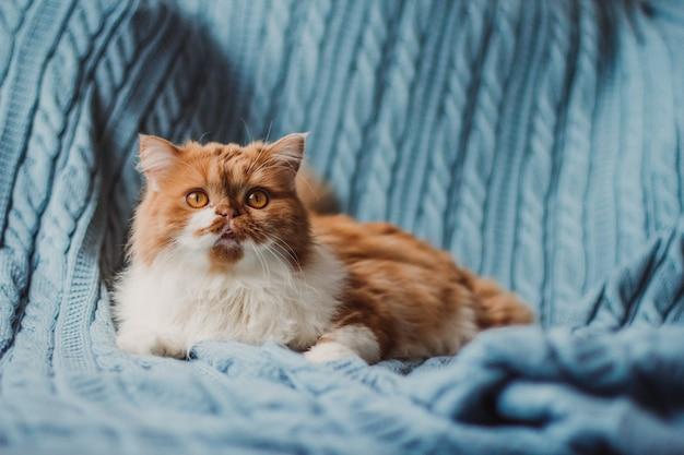 На синем вязаном пледе сидит пушистый рыжий кот.