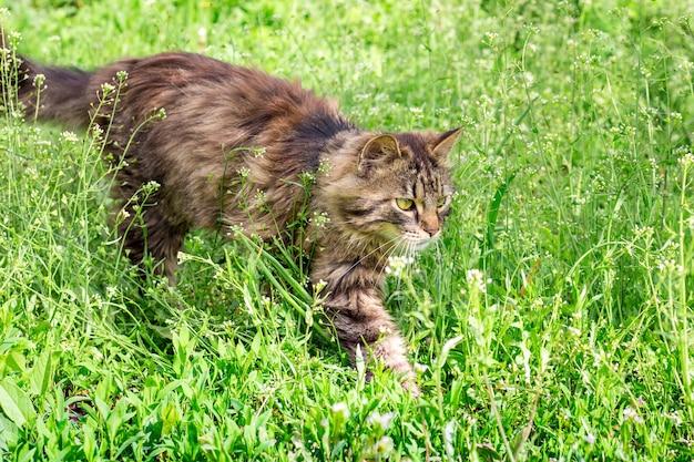 ふわふわの縞模様の猫が庭の芝生を駆け抜ける
