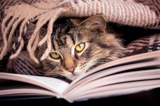 ふわふわの縞模様の猫が本の近くのラップの下にあります。お気に入りの本を読む