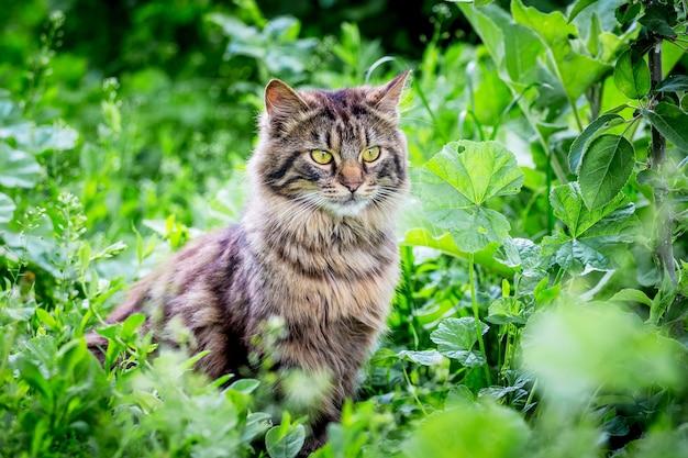 ふわふわの縞模様の猫が庭の草の中に座っています