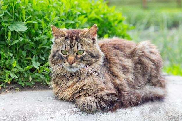 ふわふわの縞模様の猫が草で芝生に座っています