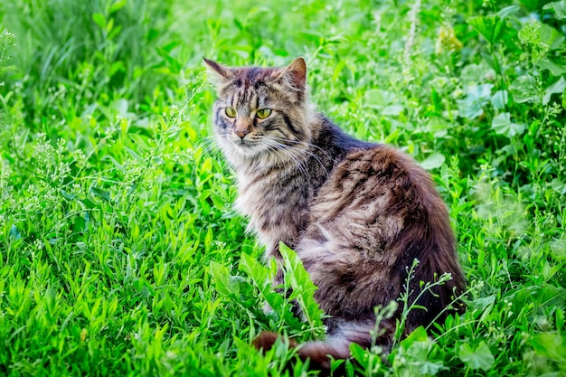 ふわふわの縞模様の猫が緑の草の上に座っています