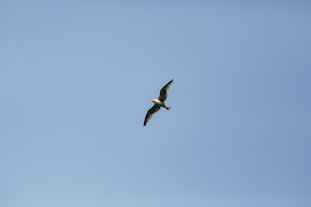 青い澄んだ空を飛ぶ鳥