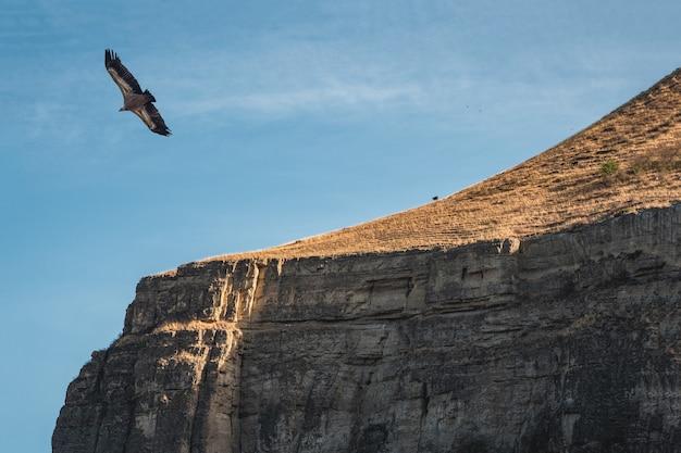 岩だらけの崖の上を飛ぶワシ。山の上の空を飛んでいるグリフォンハゲタカgypsfulvus。