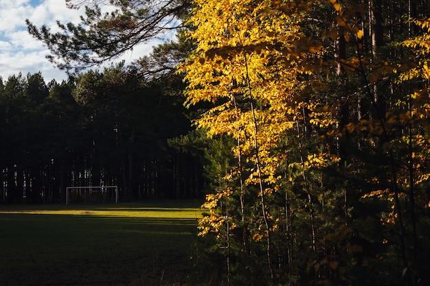 Футбольное поле посреди леса с белыми футбольными воротами на солнце