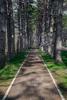 春の公園近くの松の木が立ち並ぶ森の山道。