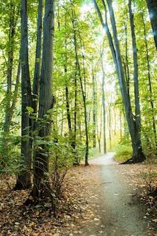 緑の木々や茂み、地面に落ち葉、キシナウ、モルドバを通る小道のある森