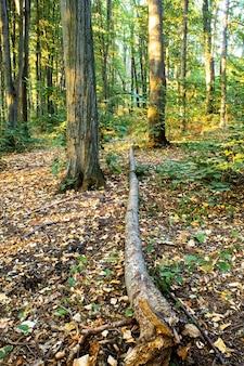 Лес с множеством зеленых и желтых высоких деревьев и кустов, опавших листьев и деревьев на земле, кишинев, молдова