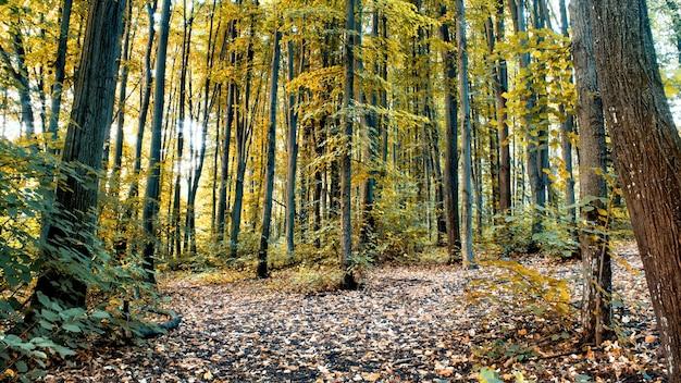 緑と黄色の高い木々や茂み、地面に落ち葉、キシナウ、モルドバがたくさんある森