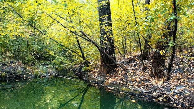 Лес с множеством зеленых и желтых деревьев и кустов, опавшие листья на земле, небольшой пруд на переднем плане, кишинев, молдова