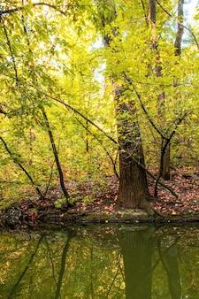 緑と黄色の木々や茂みがたくさんある森、地面に落ち葉、前景に小さな池、キシナウ、モルドバ