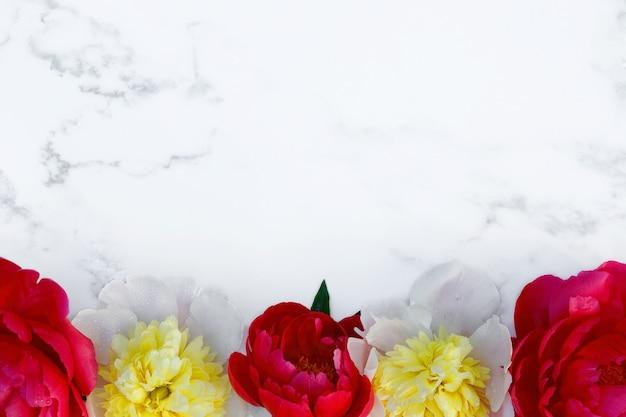 Рамка из желто-красных цветов пиона на белом фоне. украшение.