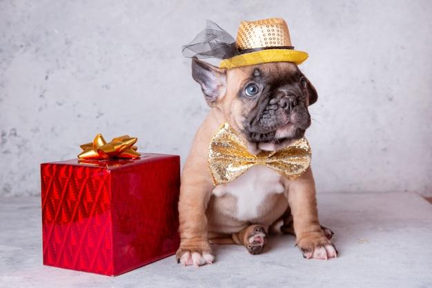 灰色の背景に贈り物を持ったフレンチブルドッグの子犬