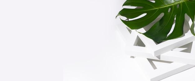 Свежий тропический зеленый лист монстера на белом фоне лежит на белой раме подиума. баннер.
