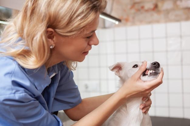 그녀의 병원에서 일하는 친절한 여성 수의사