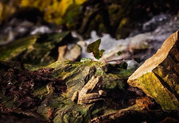 石の上のカエルは春の太陽の暖かい光線を浴びます