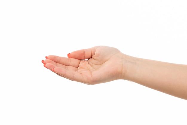 色の爪を持つ正面女性手は白で手を上げた