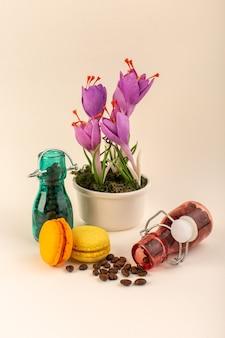 분홍색 표면 식물 색상에 커피 프랑스어 마카롱과 보라색 식물이있는 전면보기 항아리