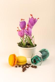 분홍색 표면에 커피 프랑스어 마카롱과 보라색 식물이있는 전면보기 항아리