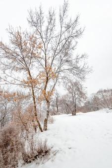 Замороженное дерево в зимнем поле и белом небе.