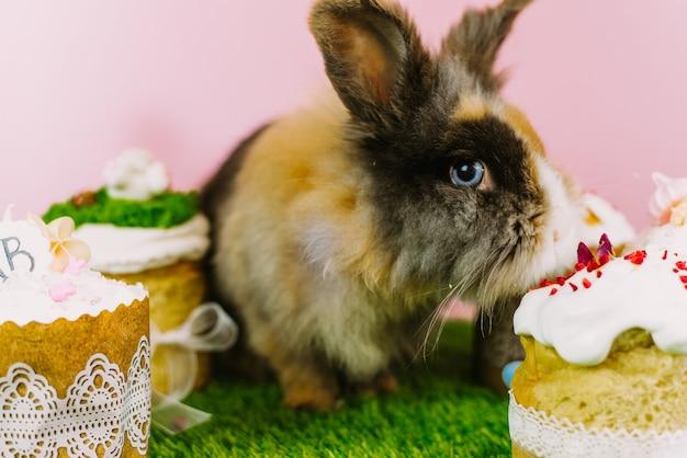 잔디와 파스텔 핑크 배경의 배경에 모피 갈색 작은 토끼는 부활절 케이크로 장식을 먹는다