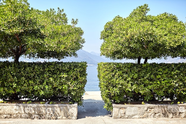 Промежуток между зелеными кустами и деревьями с видом на море, горы и голубое небо.