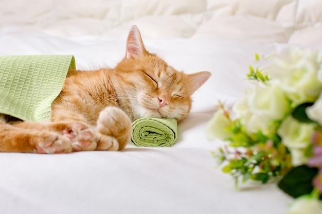 Рыжий домашний кот спит, положив голову на зеленое полотенце