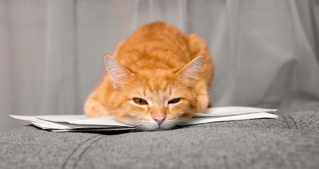 Рыжий домашний кот лежит на документах и бумагах