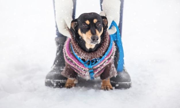 Девушка и ее сестра гуляют в зимнем парке с собакой