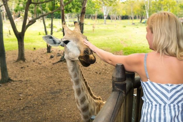 모리셔스 카셀라 공원에서 한 소녀가 아름다운 기린에게 먹이를 주고 있다