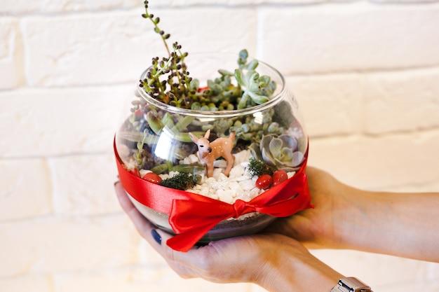 소녀는 크리스마스 리본으로 장식 된 다육 식물, 돌 및 모래가있는 유리 모양의 florariumov를 보유하고 있습니다. 가정과 사무실을위한 크리스마스 선물