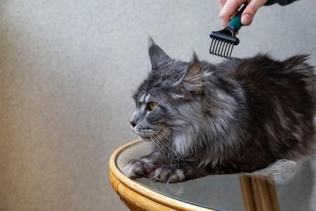 Девушка расчесывает шерсть кошке мейн-кун уход за волосами уход за домашними животными