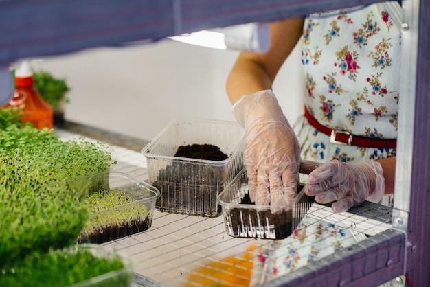 Девушка сажает семена микро-зелени крупным планом в современной теплице. здоровая диета.