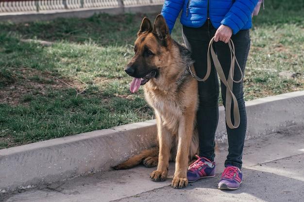 Девочка гуляет с собакой на улице. отдых с домашним животным во время карантина. прогулка с немецкой овчаркой по городу на свежем воздухе.