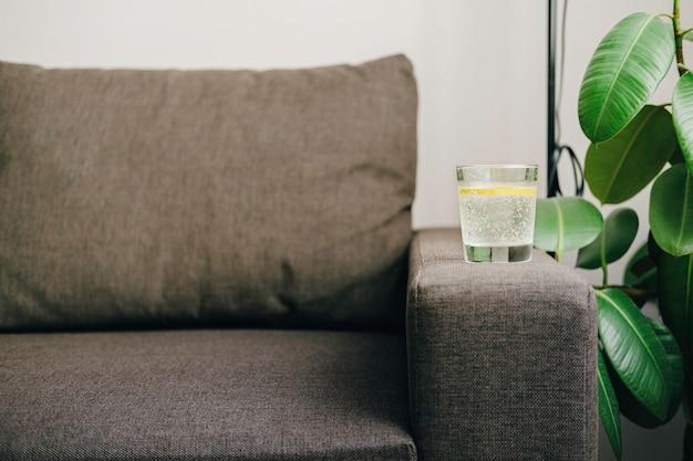 레몬 물 한잔. 최소한의 디자인. 소파, ficus 및 햇빛