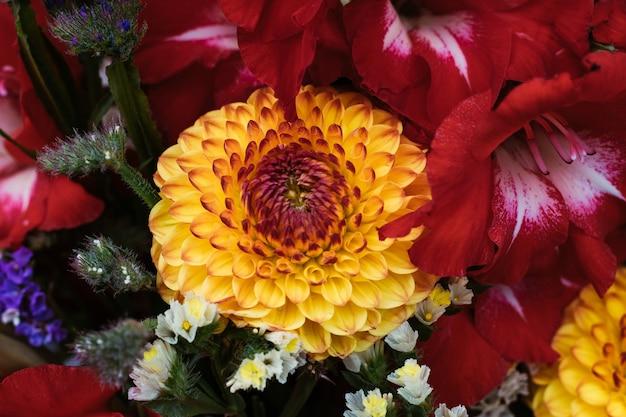 식물과 다른 꽃으로 둘러싸인 노란색과 빨간색 달리아 꽃의 화려한 샷