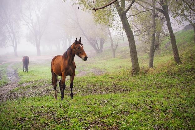 牧草地の優雅な馬