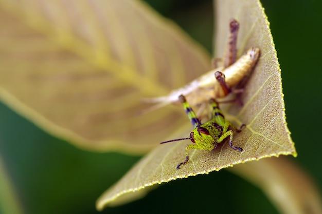 얕은 초점에서 화창한 아침에 메뚜기.
