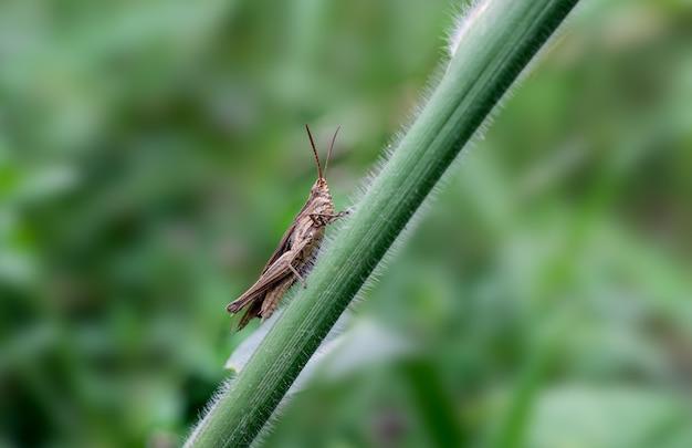 녹색 나뭇가지에 앉아 있는 메뚜기 클로즈업 매크로